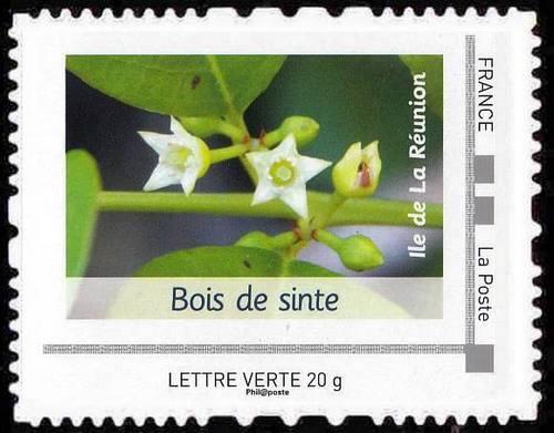 plante verte 10 lettres